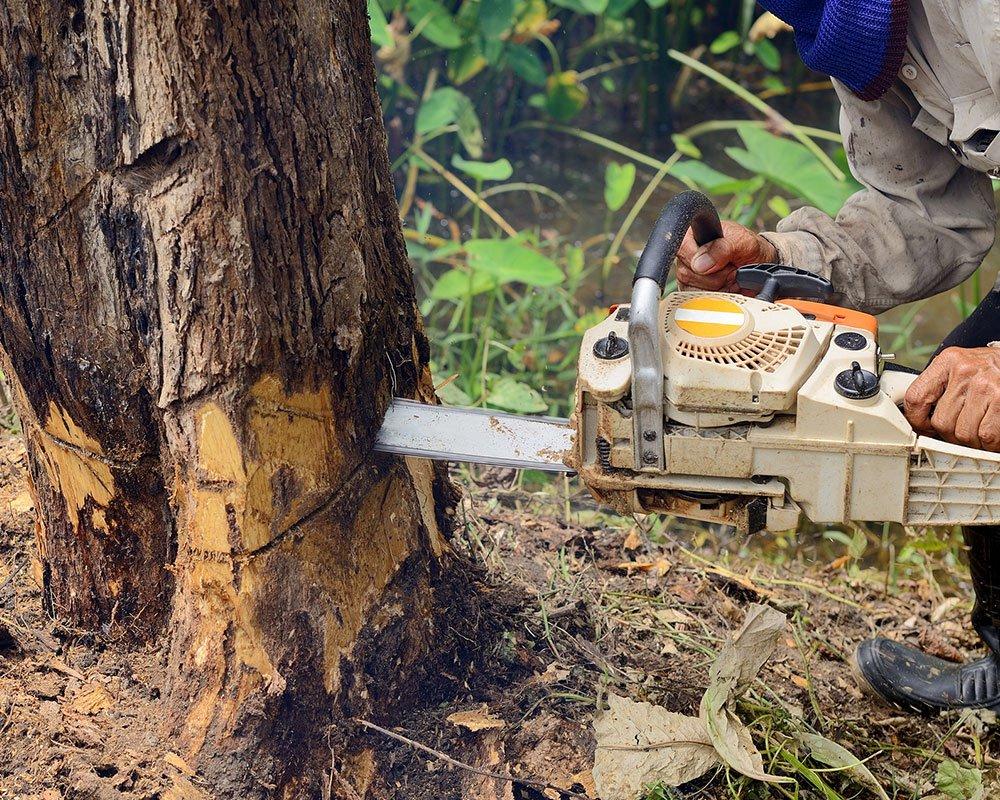 Tree Service Brandon - Tree Removal