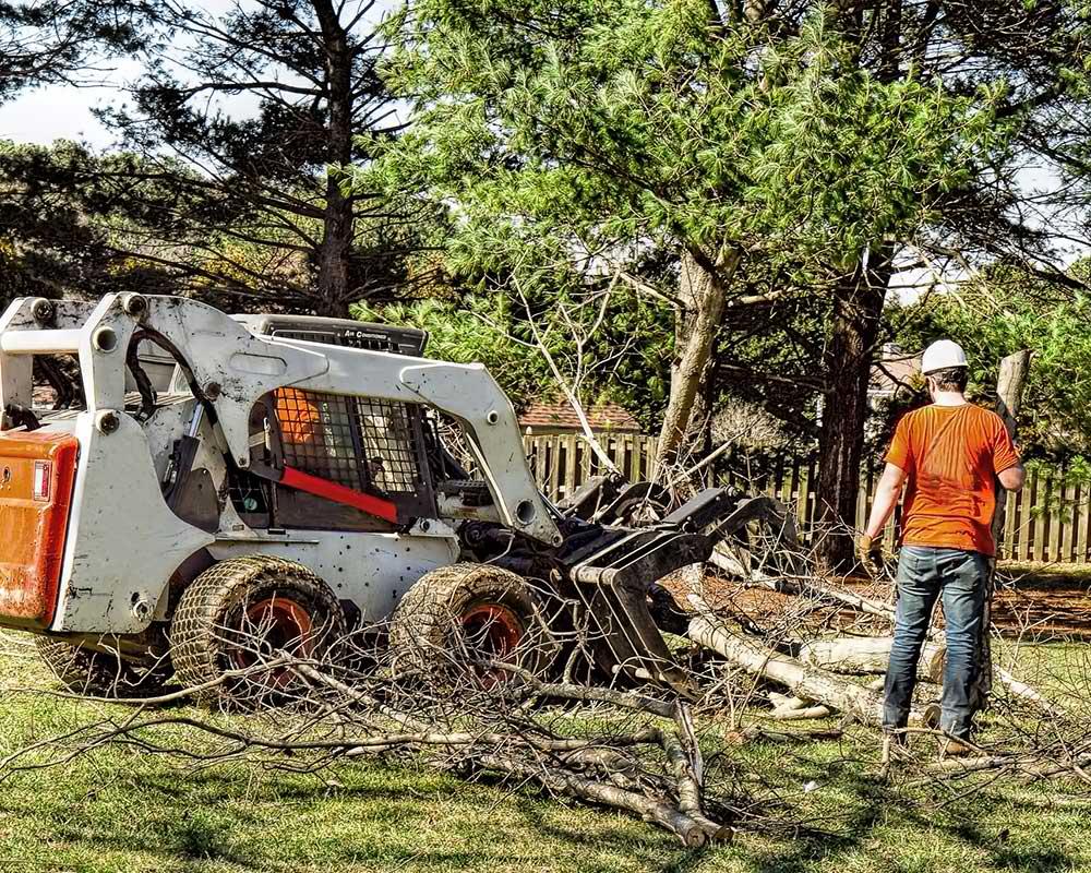 Tree Service Brandon - Arborist
