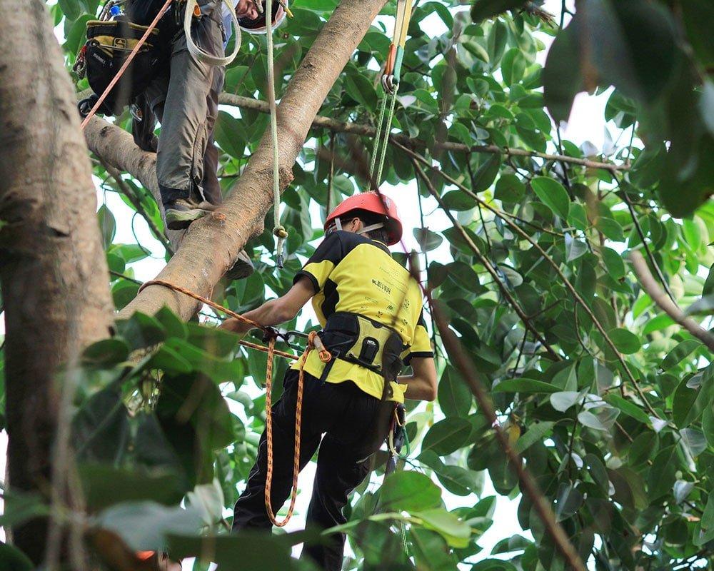Tree Service Brandon - Emergency Tree Removal