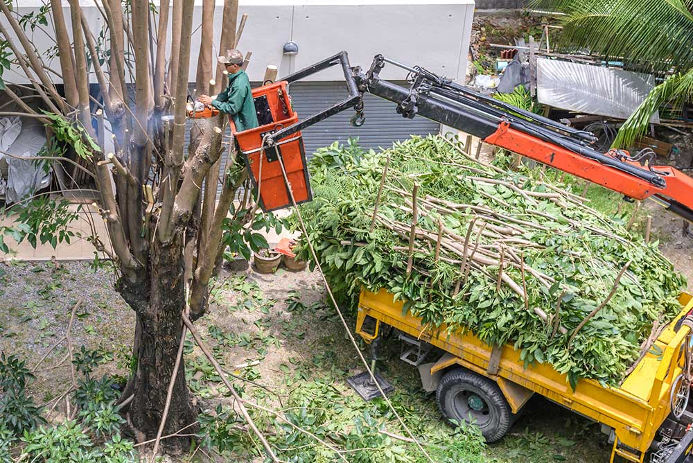 Tree Service Brandon - Tree Pruning