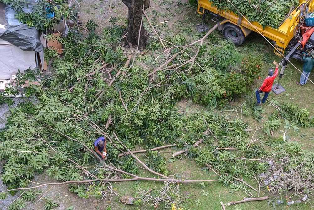 Tree Service Brandon - Tree Trimming